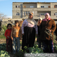 Augmenting Food Production and Income in Times of Siege: Urban Gardens